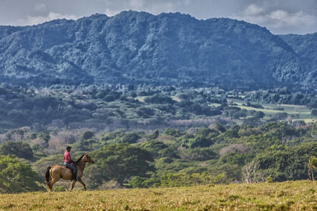 Amazing views from the Bellvue rainforest trail ride