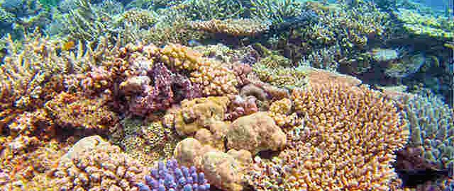 coral reef diving in Port Vila, Vanuatu