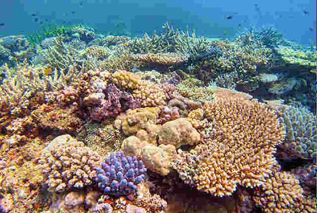 coral reef diving in Port Vila, Vanuatu