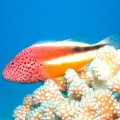 colourful fish on the coral reef in Vanuatu