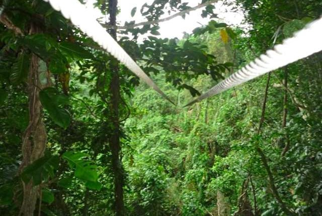 Zipline through jungle near Port Vila, Vanuatu