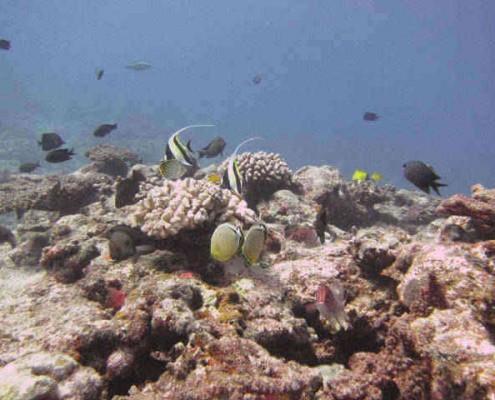 Snorkelling on coral reefs in Vanuatu