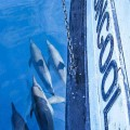 Dolphins on Coongoola day trip