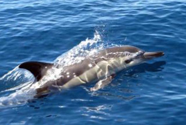 Dolphin seen on sailing day tour port vila