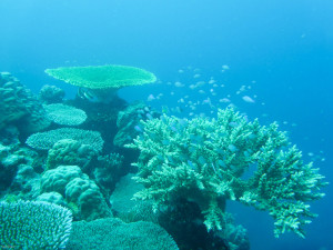 Coral unaffected by cyclone Pam in Port Vila