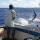 Marlin fishing in Port Vila, Vanuatu