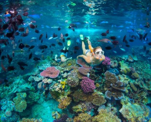 Snorkeling amongst the coral and fish