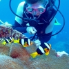 Diving with Nemo in Vanuatu