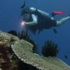 Night diver in Vanuatu